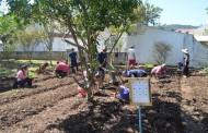 Praia da Daniela implanta horta comunitária