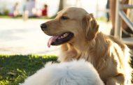 Lei que garante o sepultamento de animais domésticos em cemitérios municipais foi sancionada na Capital
