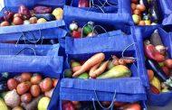 Programa Mesa Brasil doa mais de mil toneladas de alimentos para famílias carentes da Grande Florianópolis